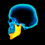 3d rendered illustration - jaw bone - side view