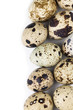Quail eggs border