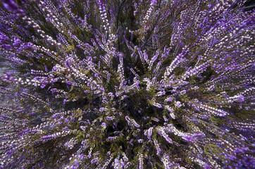 purple flowers on the ground
