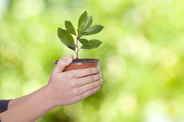 Hands of young woman with small tree in a container