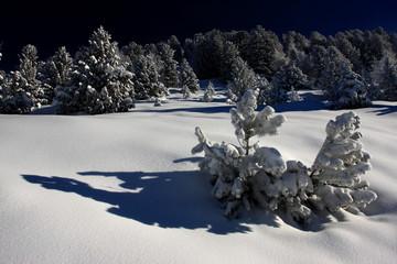 Eingeschneiter Bergwald
