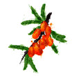 Sea buck thorn made of colorful splashes on white background