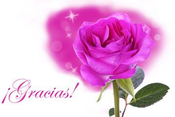 Pink Rose with Gracias