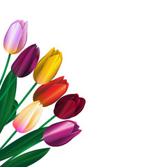 bouquet of different color tulips 2