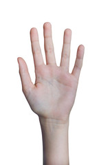 Paume d'un main, isolé fond blanc