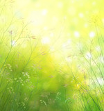 Spring nature background.
