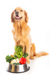 Happy golden retriever dog with vegetables