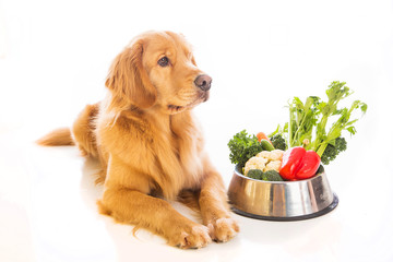 Golden Retriever Dog Food