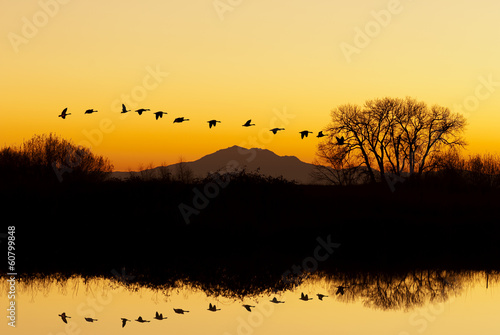 Silhouette of Geese Flying at Sunset