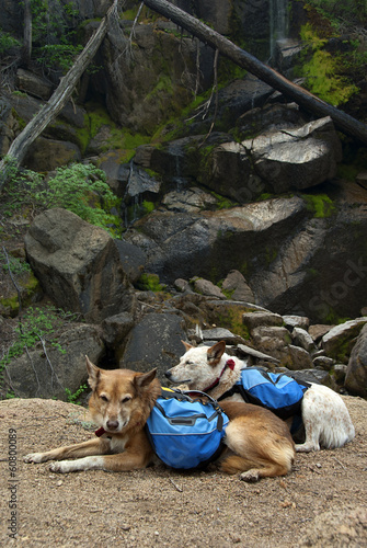 Back Packing Dogs