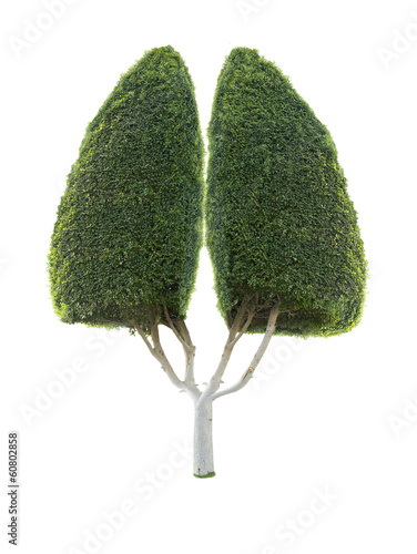 decorative tree as human lung