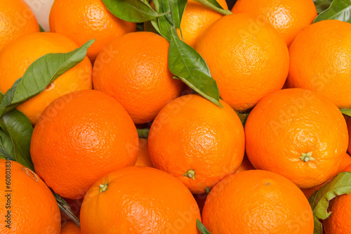 canvas print picture Tasty valencian oranges freshly collected