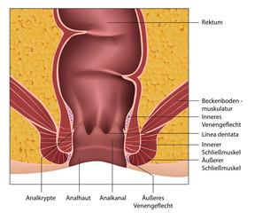 Anatomie Rektum - Analkanal, Erklärung deutsch