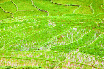 Paddy fields in northern Thailand