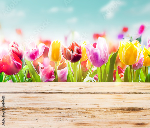 Colourful tulips with rustic wooden boards