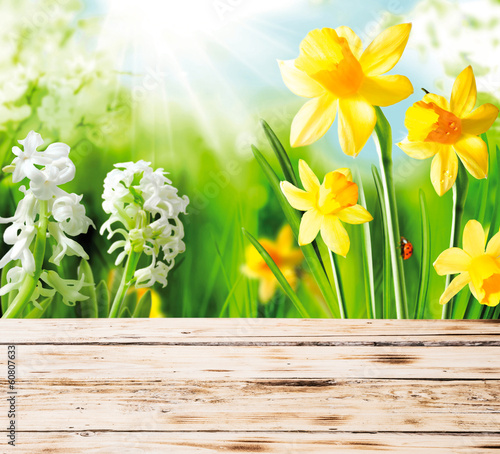 Colourful yellow spring daffodils and hyacinths with a red ladyb
