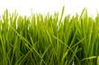 canvas print picture - Gras mit Wassertropfen