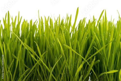 canvas print picture Gras mit Wassertropfen