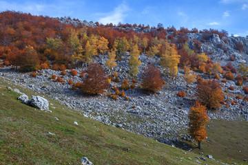 The Mehedinti Mountains