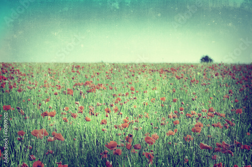 Poppy Field - Cross Processed
