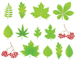 Green ecology leaves set