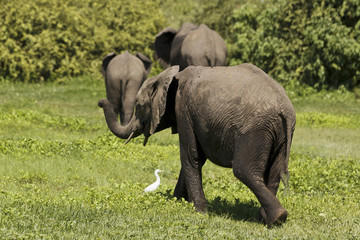 Kleiner Elefant sagt Auf Wiedersehen