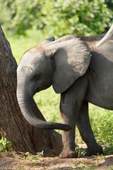 Kleiner Elefant am Baum