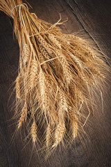 Ears of wheat on dark background