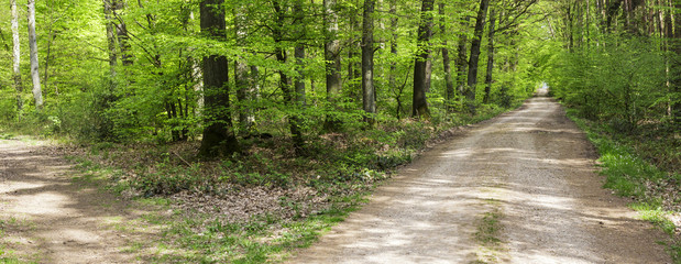 Blick in den Wald 2