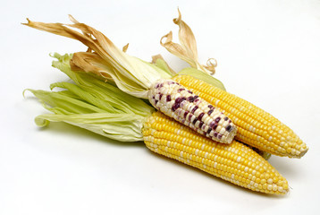 Fresh corn isolated