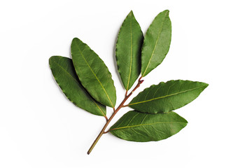 Bay Leaves green