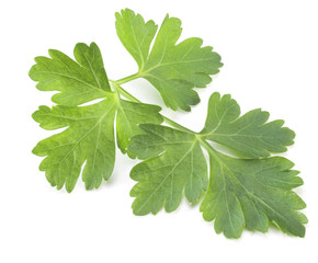 Green parsley isolated on a white background.