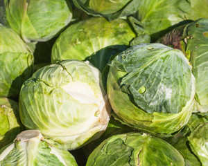 White cabbages