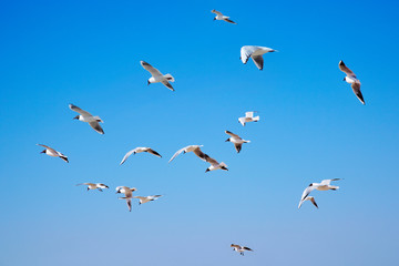 Seagulls flight in blue sky