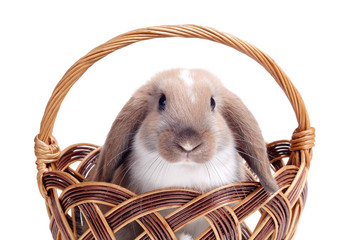 Rabbit it a basket isolated on white