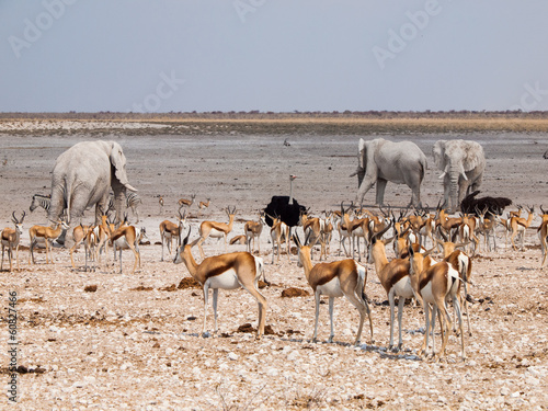 Many animals at waterhole