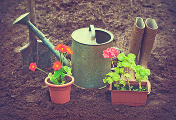 Gardening tools and potted flowers outdoors