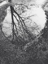 Kałuża z drzewa odbicie