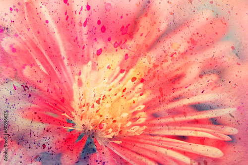watercolor artwork with red aster close up