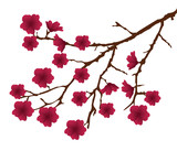 vector cherry blossom branch with red flowers - 60838219