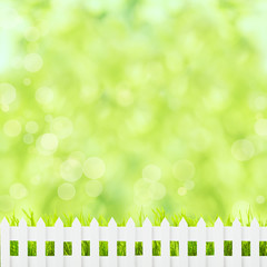Green grass and fence