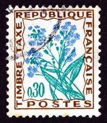 Postage stamp France 1964 Forget-me-not, Flower