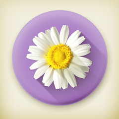 Chamomile, long shadow vector icon