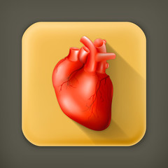 Human heart, long shadow vector icon