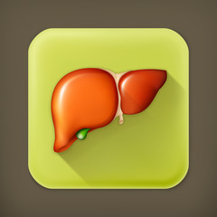 Human liver, long shadow vector icon