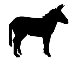 ane symbol