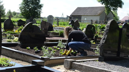 girl plant begonia flowers on close friend grave in cemetery