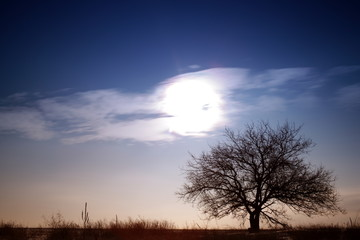 Lonely tree on a background of sky and sun
