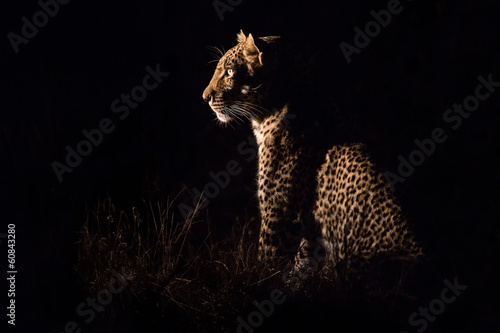 Aluminium Luipaard Leopard sitting in darkness hunting prey