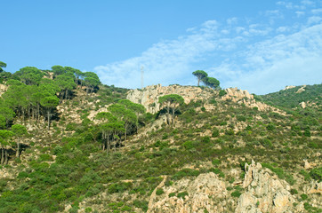 Tropical mountain hill with trees and bushes.